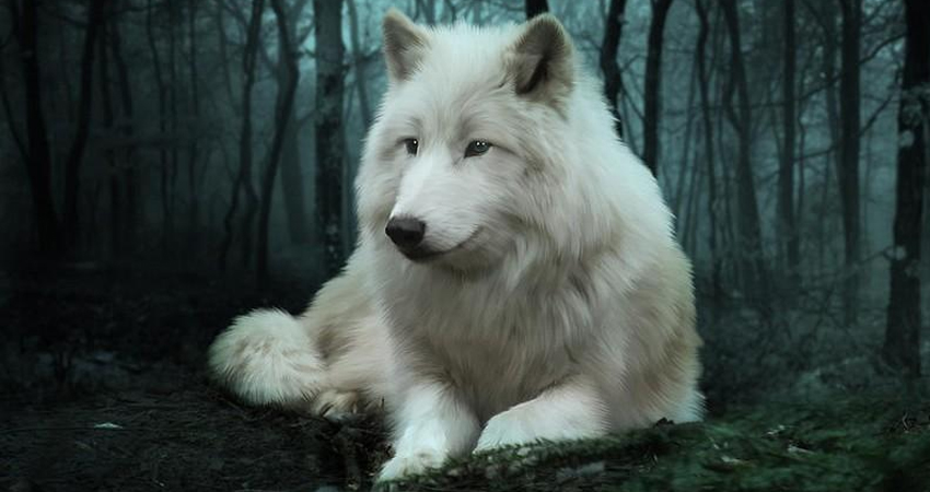 caracteristicas-de-lobo